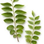 Amazing Benefits of Curry Leaves for Good Health