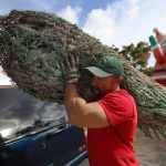 This is the best day to buy a Christmas tree