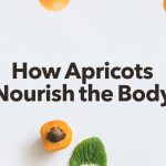 How Apricot Nourishes The Body