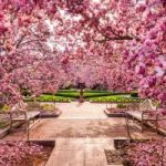 Spring allergies and weather changes: Are your ears ready?