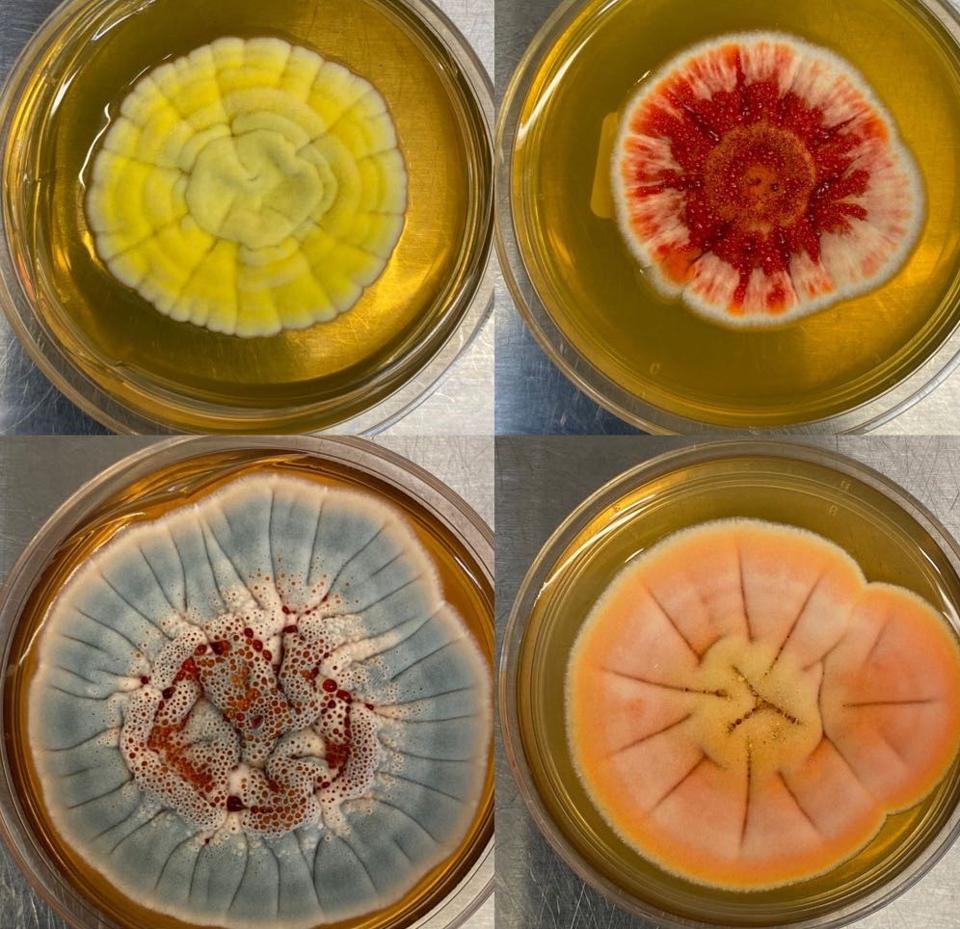 Fungi in the lab
